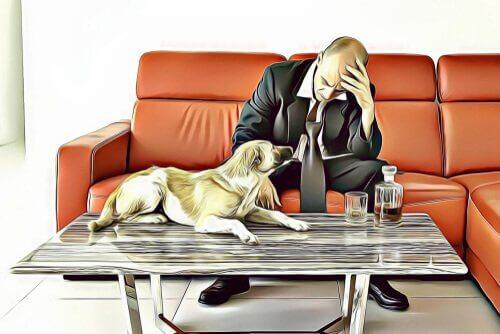 Divórcio e pets