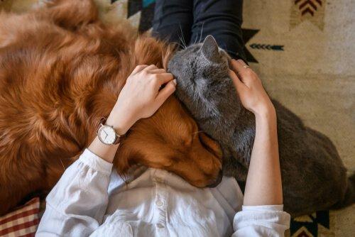 4 formas de demonstrar amor por um animal de estimação