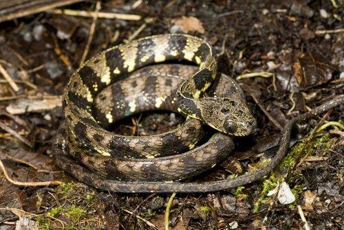 Novas espécies de serpentes