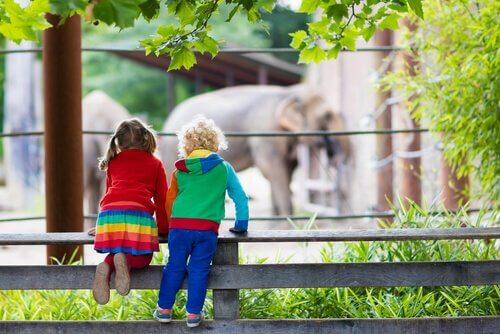Diferenças entre um zoológico e um santuário