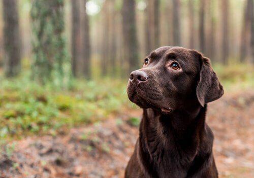 Endogamia: a cor do cachorro pode repercutir em sua longevidade