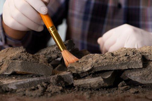 Descoberta de fósseis