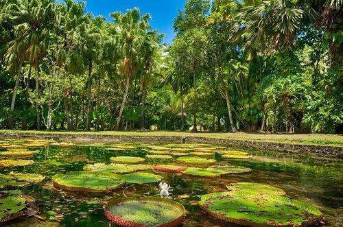 Quais são as selvas mais atraentes do mundo?