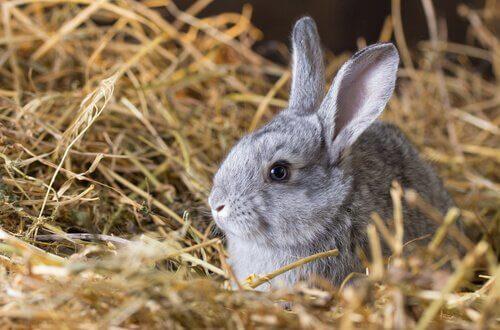 Alimentação dos coelhos e os dentes dos roedores