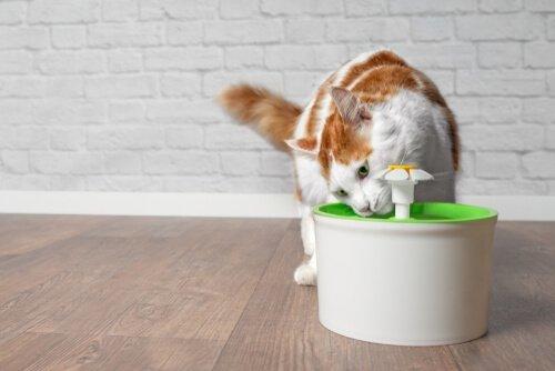Componentes e funcionamento da fonte de água para gatos
