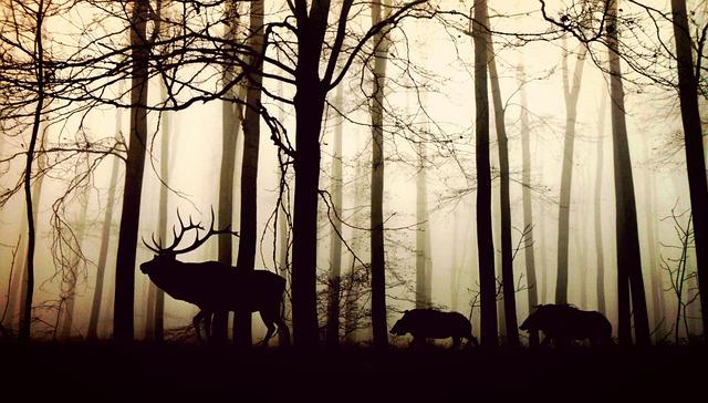 O ser humano influencia no surgimento de câncer em animais selvagens?