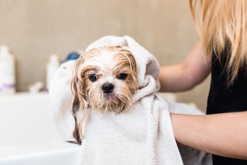 Fragrâncias específicas para cães