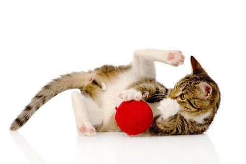 Gato brincando e se divertindo