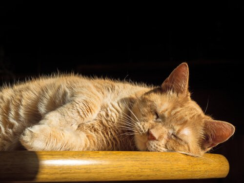 Os gatos sonham