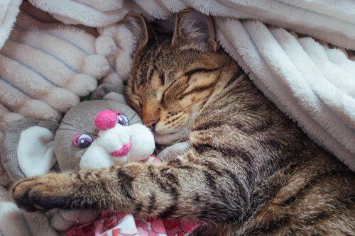 Fases do sono dos gatos