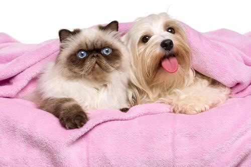 Gato e cachorro juntos