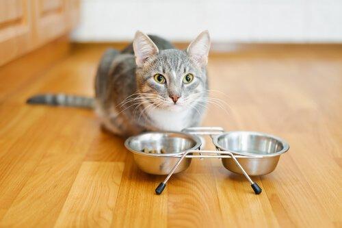 O que fazer quando o gato não come?