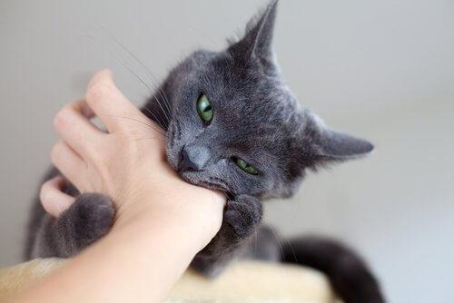 Definindo limites para os gatos