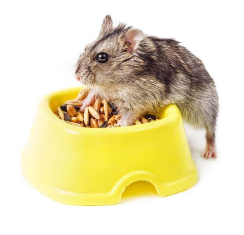 A alimentação do hamster