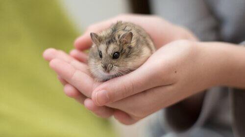 Animais de estimação ideais para crianças pequenas