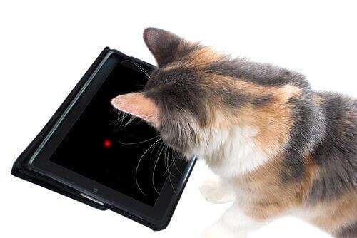 7 opções de jogos de tablet para gatos
