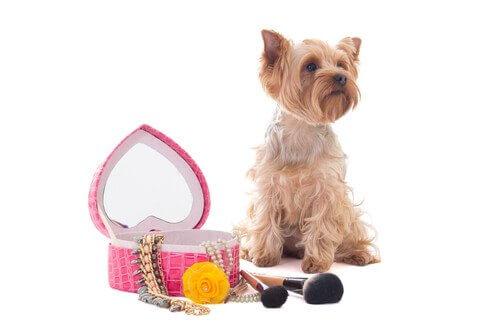 Produtos de beleza para cães