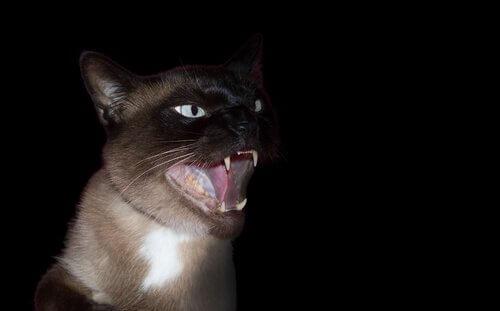 Medo de gatos