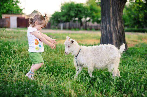 As cabras preferem que você sorria