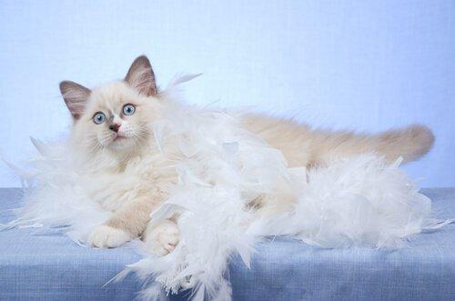 5 coisas que você deve saber sobre a troca de pelos dos gatos