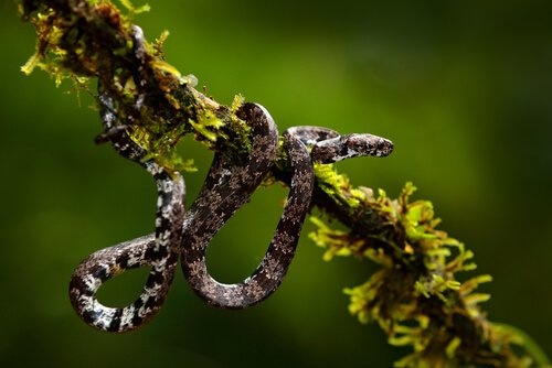 O que as serpentes descobertas no Equador comem?