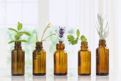 Uso de óleos essenciais em animais de estimação