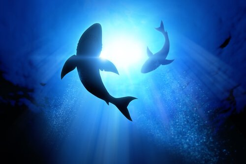 Tubarões nadando