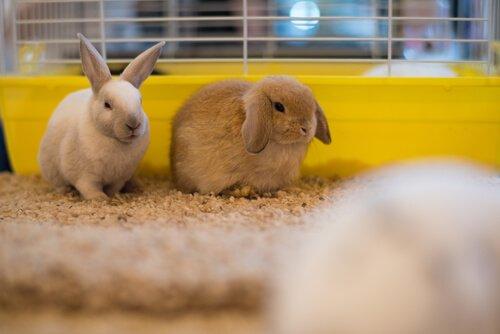 Problemas de saúde em coelhos