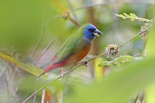 6 tipos de pássaros tropicais