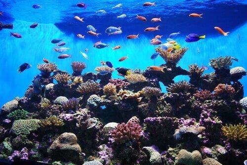 Peixes de grande beleza para o seu aquário