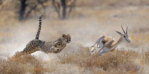 Predador e presa