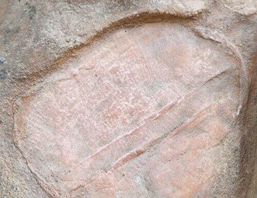 Dickinsonia, o primeiro animal do mundo
