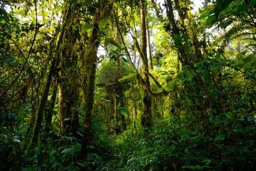 As florestas mais bonitas do mundo