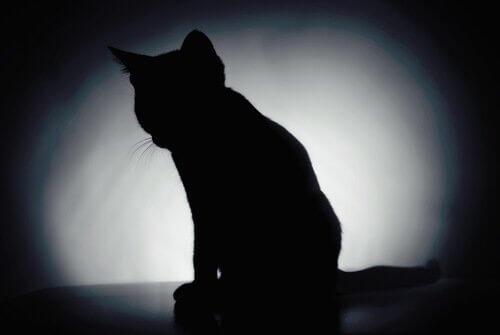 Sombra de gato