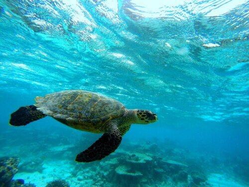 O casco da tartaruga: aspectos morfológicos