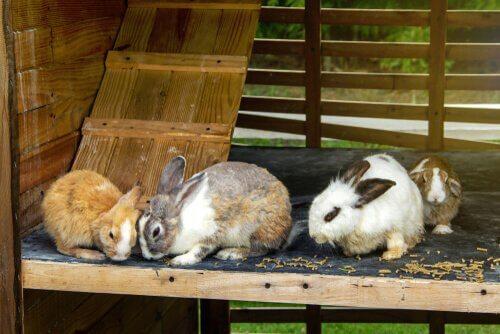 Coelheira para coelhos