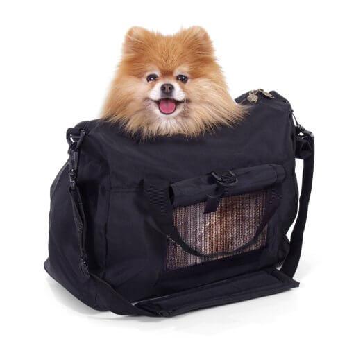Como transportar um cachorro
