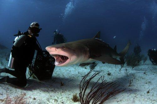 Ameaças ao tubarão-tigre