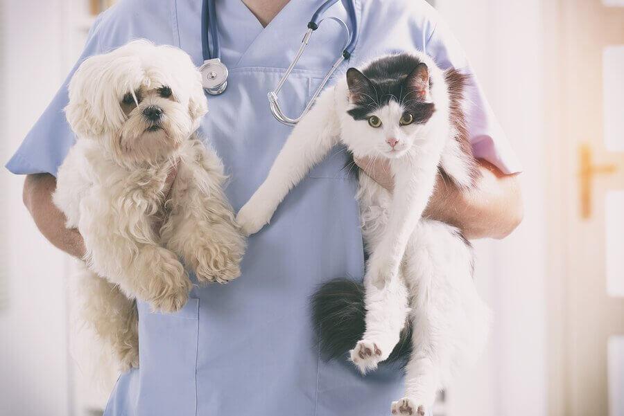 O que fazer ao resgatar um gato ou um cão