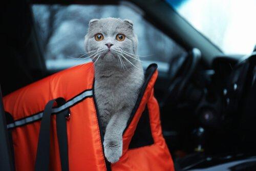 Viajar com um gato no carro