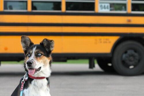 5 dicas para levar seus animais de estimação no transporte público