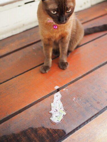 Causas do vômito em gatos