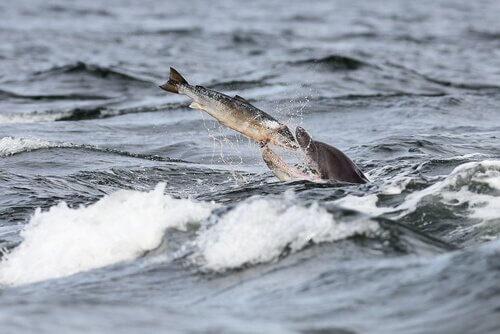 Alimentação dos golfinhos no mar