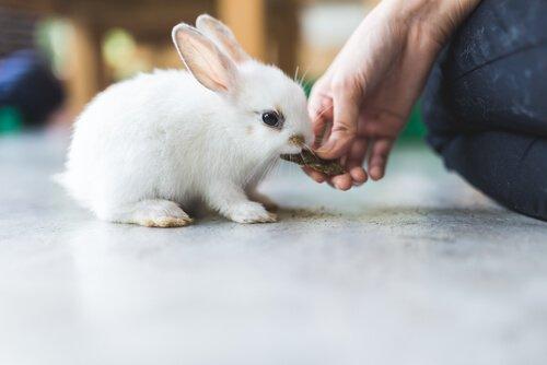 Alimentação do coelho