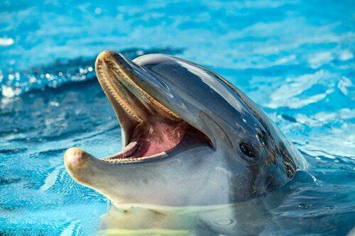 Curiosidades sobre a alimentação dos golfinhos
