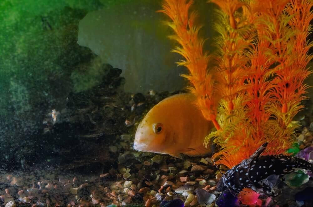 Seu peixe está saudável?