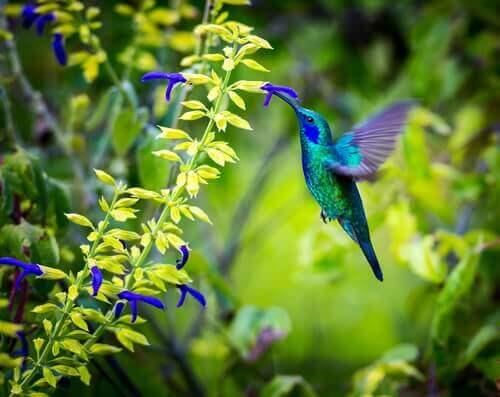 Exemplos de coevolução: diversidade de flores