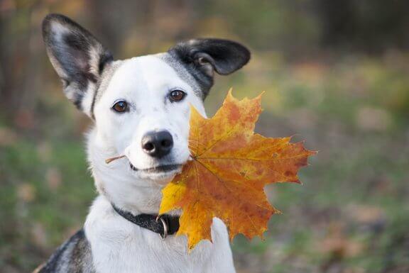 A alimentação dos cães no outono