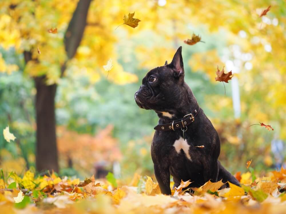 Apetite e comportamento dos cachorros durante o outono