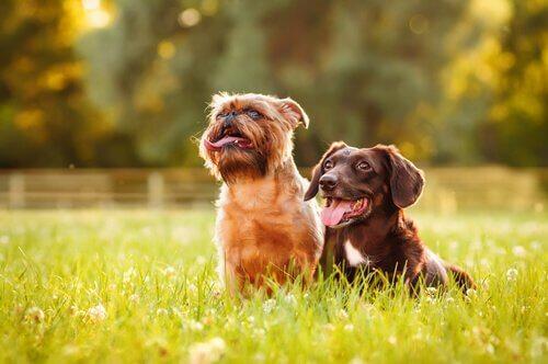 Como escolher um bom parque para levar o seu cachorro?